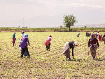 Konya'da Çiftçilere Destek Sürüyor